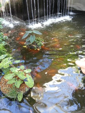 Callaway gardens a virtual tour s k nicholls for Virtual koi fish pond