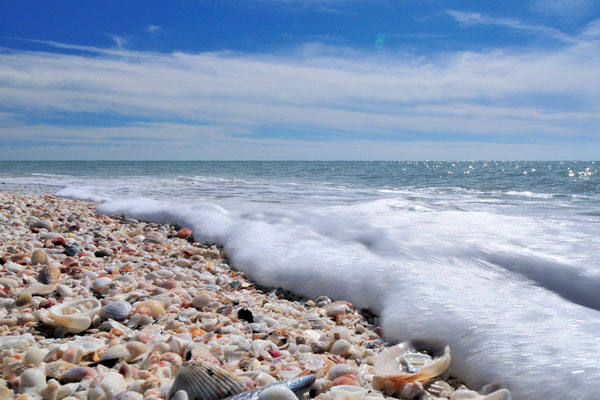 Sanibel Island Shells: Cape Romano: Our Secret Sanctuary