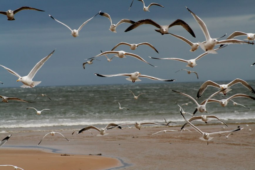 The-Birds-at-Hitchcocks-Beach