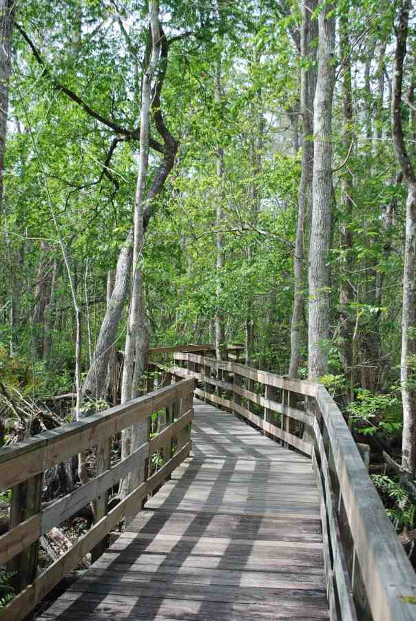 osceola-boardwalk-1-v